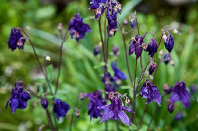Wildflowers, (Le Vignaud Blues)