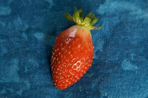 The First RED Strawberry!