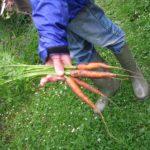 Random image: Baby Carrots
