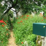 Random image: Poppies and the Mailbox