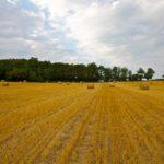 Random image: French Hay Bales #1