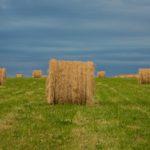 Random image: French Hay Bales #6