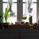 Random image: Kitchen Window