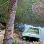 Random image: Fishing Boat and Tree