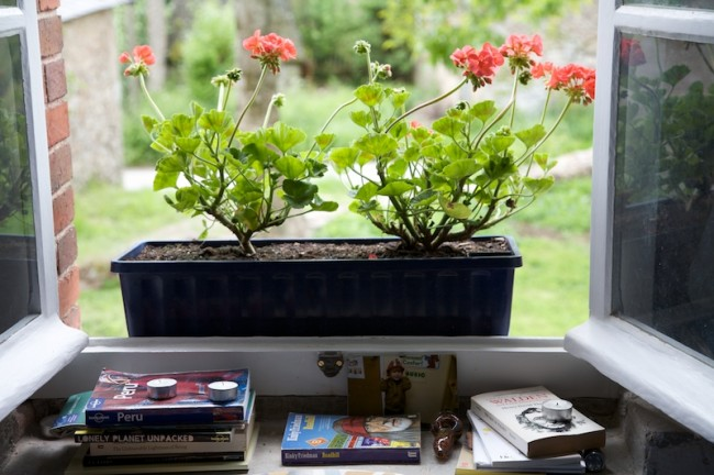 Geraniums, Tyler's Photo, and Some Books