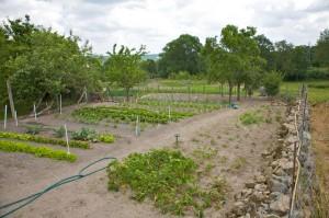 Communal Garden Plots
