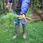 Random image: New Carrots