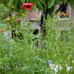 Random image: Poppies and Wildflowers
