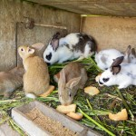 Jeanine&#039;s Rabbits