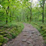 Random image: Forest Trail