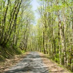 The road leading to the village...