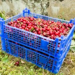 Random image: Caises of Cherries