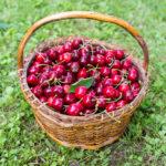 Random image: Basket of Cherries