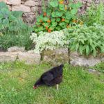 Random image: Bibiche in the Garden