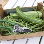 Random image: First Harvest of Beans and Courgettes
