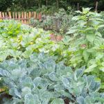 Random image: Green Garden