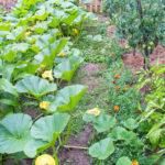 Random image: Pumpkins, Tomatoes, etc...