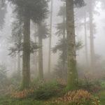 Random image: Foggy Forest