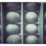 Random image: Fresh Eggs