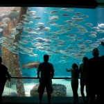 Random image: Shark Tank