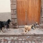 Random image: Street Dogs