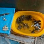 Random image: Frogs