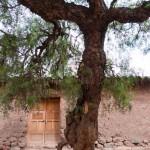 Random image: Holy Tree