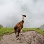 Random image: Llama Contemplating the Abyss