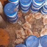 Random image: Chickens
