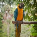 Random image: Parrot