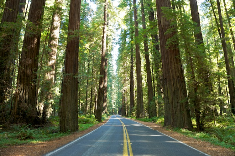 Avenue of the Giants, Humboldt Redwoods State Park