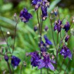 Random image: Wildflowers, (Le Vignaud Blues)