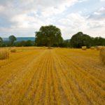 Random image: French Hay Bales #2