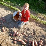 Random image: Alexi Collecting the Potatoes