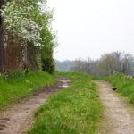Random image: Spring Trail