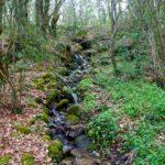 Random image: Spring Cascades
