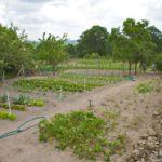 Random image: Communal Garden Plots