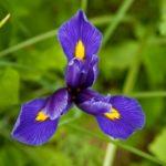 Random image: The First Iris