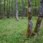 Random image: Green Oak Forest