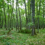 Random image: Green Forests