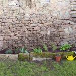 Random image: Herb Garden