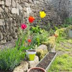Random image: Tulips and Herbs