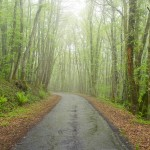 Random image: Foggy Afternoons and Green Forests