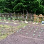 Random image: Garden #2 After Planting