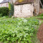 Random image: Green Potato Field