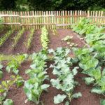 Random image: Garden #2