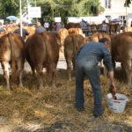 Random image: Cow Wash