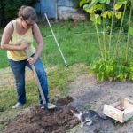 Random image: Lena and Filou Digging Potatoes