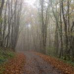 Random image: The Road to Les Verines