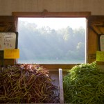 Random image: Green Beans and a View